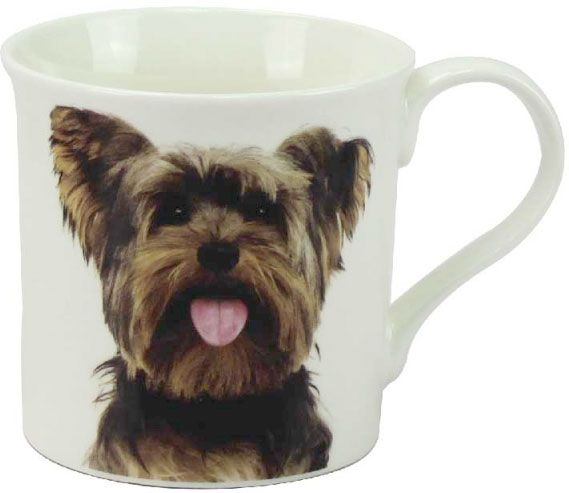 Becher Yorkshire Terrier, Portrait
