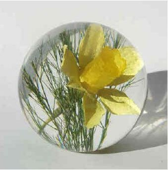 Briefbeschwerer Narzisse (Daffodil)