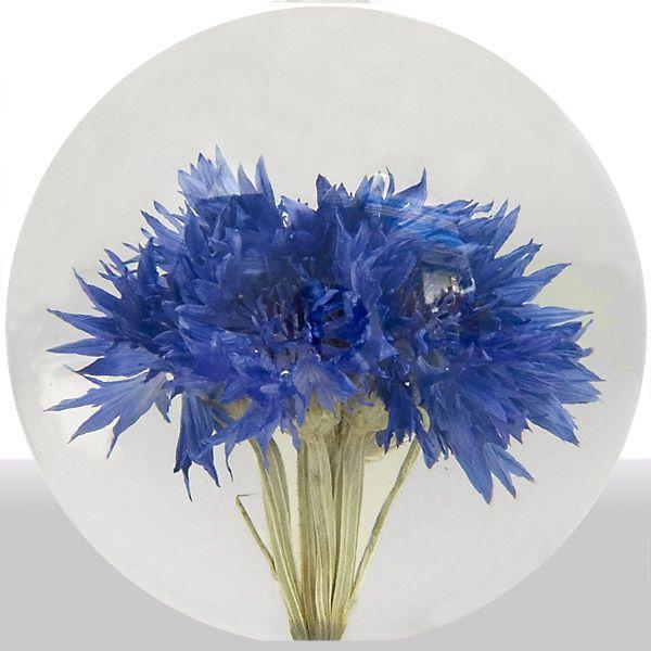 Briefbeschwerer Kornblume (Cornflower)