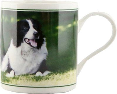 Becher Border Collie