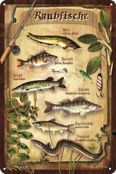 Blechschild Raubfische