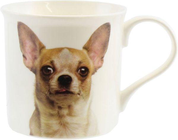 Becher Chihuahua, Portrait